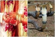 Wedding Tradition: અહીં દહેજના નામે વરપક્ષને અપાય છે 21 સાપ