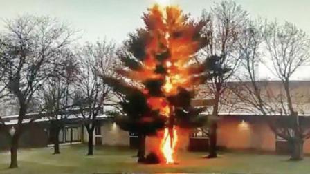 વૃક્ષ બળીને ખાખ