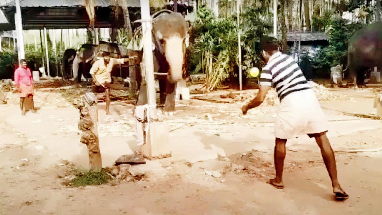 ક્રિકેટ રમતો હાથી
