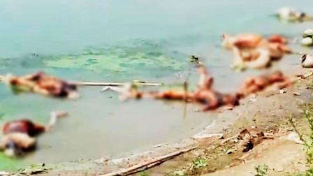 બિહારમાં બુક્સર ખાતે ચૌસામાંની ગંગા નદીના કાંઠે ડઝનબંધ મૃતદેહ જોવા મળતાં સ્થાનિક લોકોમાં ફફડાટ મચી ગયો હતો. કોરોના વાઇરસની ચેપી લહેરના માહોલમાં આ મૃતદેહો કોવિડના દરદીઓના હોવાનું મનાય છે. પી.ટી.આઇ.
