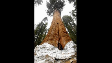 વૃક્ષ બચાવવાની કવાયત