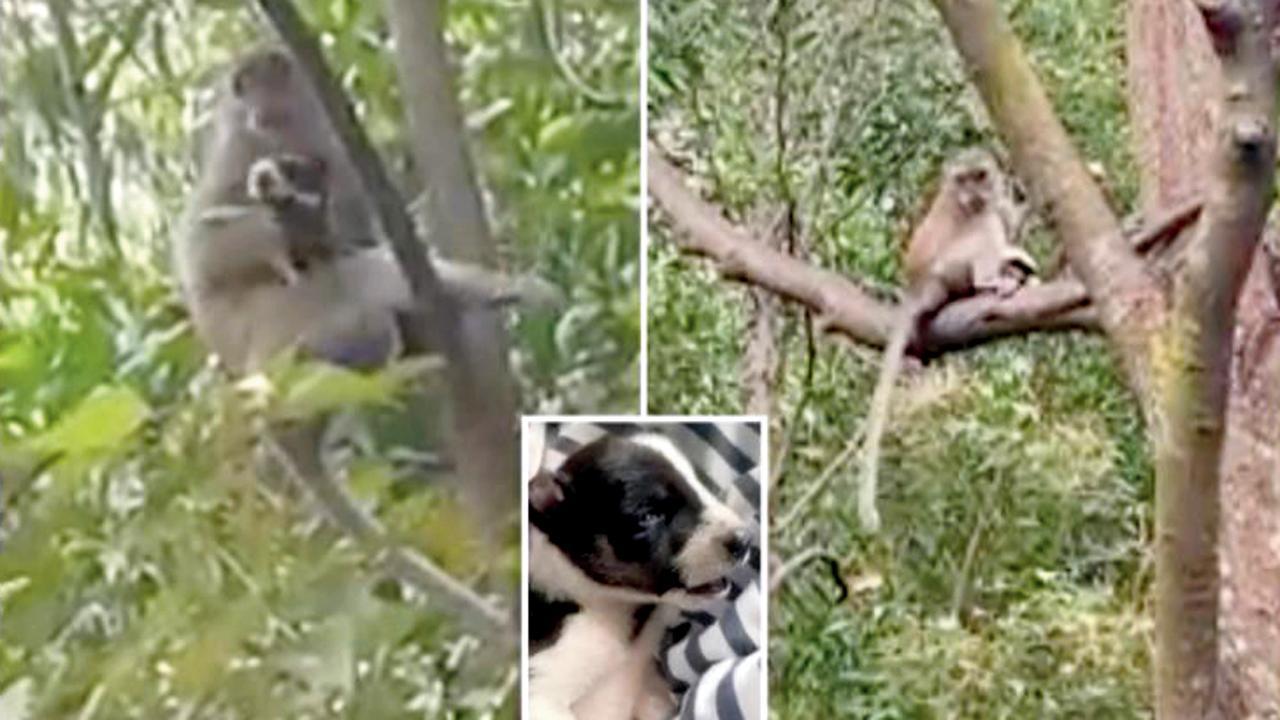 જંગલી વાંદરાએ કુરકુરિયાને ત્રણ દિવસ બાનમાં રાખ્યું