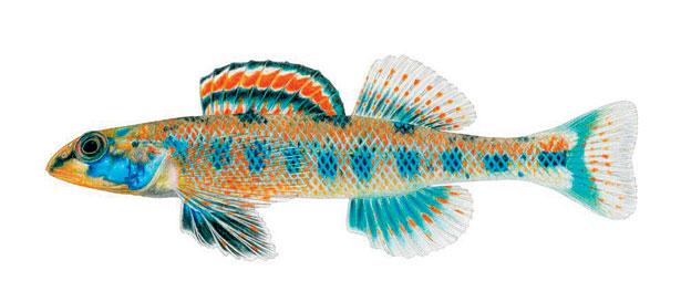 ના હોય! આ માછલીનું નામ છે બરાક ઓબામા