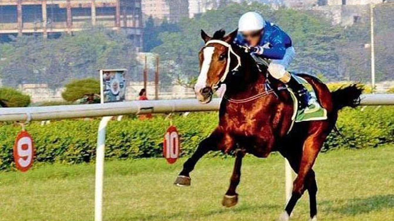 Horse race betting in mumbai cable explanation of odds in sports betting