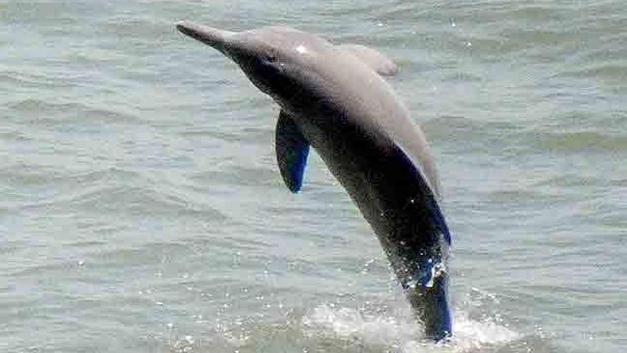 Dolphin beaten to death in Uttar Pradesh canal